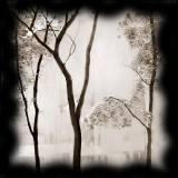 Мрачные деревья